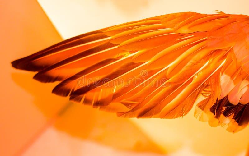 Piękni ptasi piórka dla dekoracyjnych celów obraz stock
