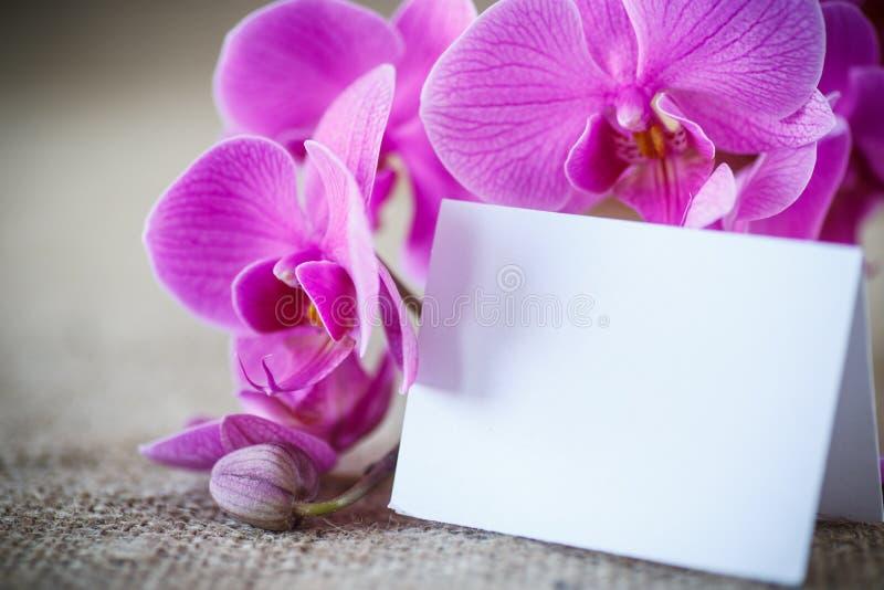 Piękni purpurowi phalaenopsis kwiaty obraz stock