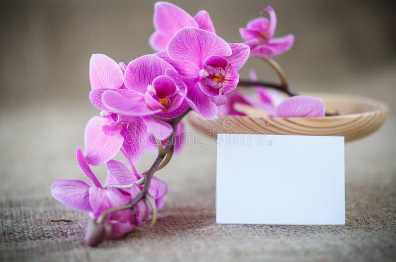 Piękni purpurowi phalaenopsis kwiaty zdjęcie stock