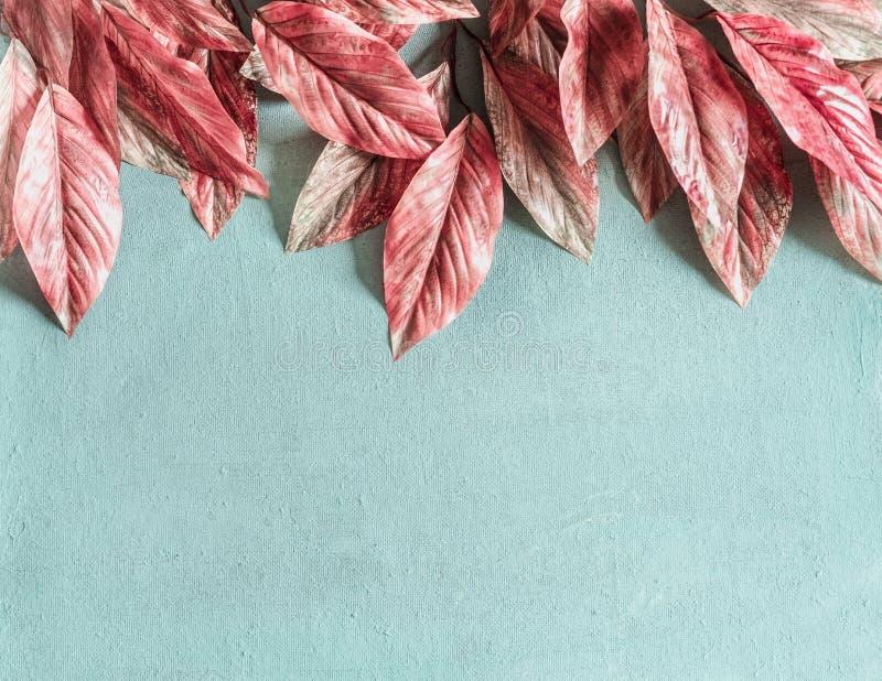 Piękni różowi liście graniczą na pastelowym błękitnym tle, odgórny widok, mieszkanie nieatutowy obrazy royalty free