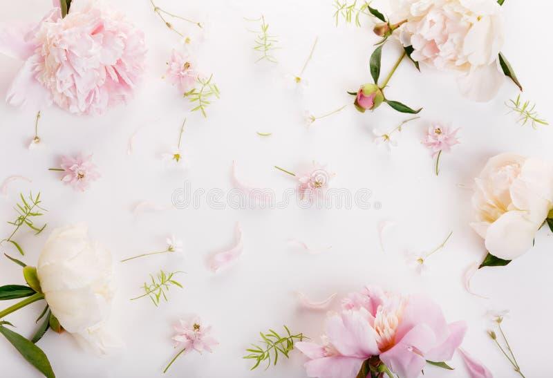 Piękni różowi peonia kwiaty na bielu stole z kopii przestrzenią dla twój odgórnego widoku teksta mieszkania i kłaść styl obrazy royalty free