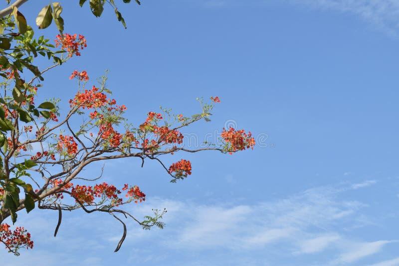 PIĘKNI rewolucjonistka kwiaty I niebieskie niebo zdjęcie stock