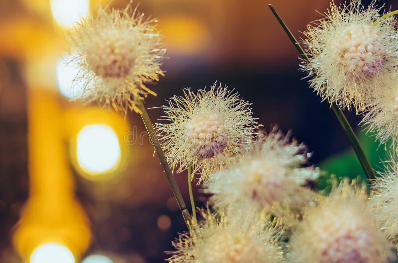 Piękni Sztuczni klingerytów kwiaty dekorujący w sklepach z kawą zdjęcia stock
