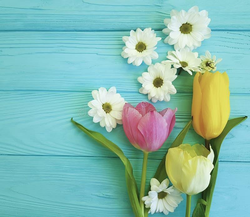 Piękni tulipany chryzantem matek dzień na błękitnym drewnianym tle, zdjęcie royalty free