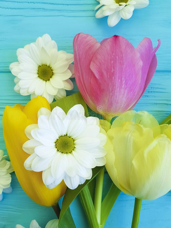 Piękni tulipany chryzantemy świętowanie przyprawiają tła powitania matek dzień na błękitnym drewnianym tle, obraz stock