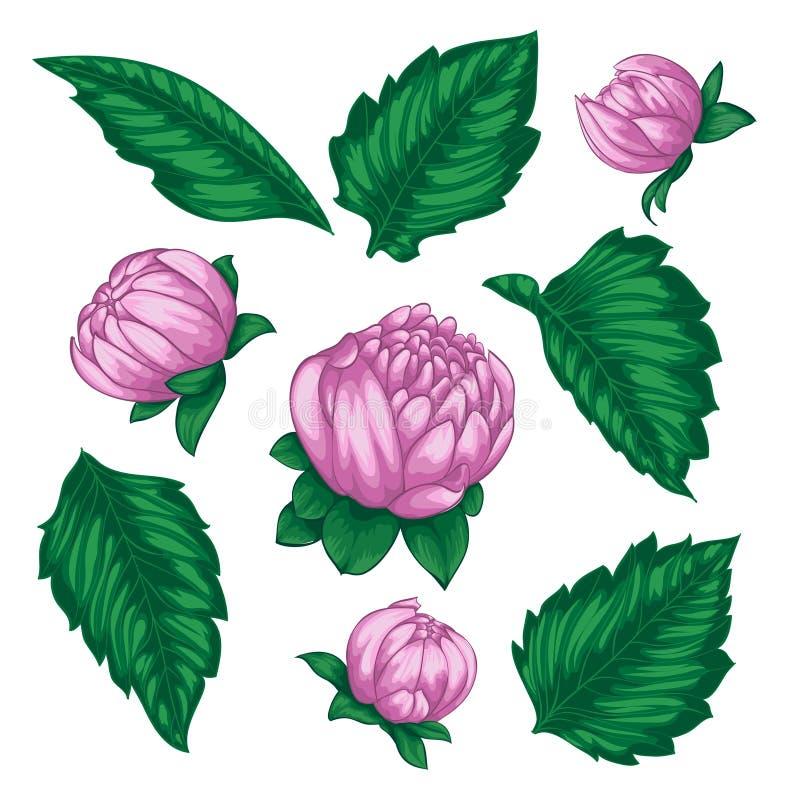Piękni wektorów kwiaty ustawiający Kolorowa kwiecista kolekcja z liśćmi i kwiatami ilustracji