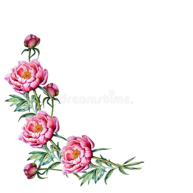 Piękni wianki okwitnięcia i peonia kwiaty ilustracji