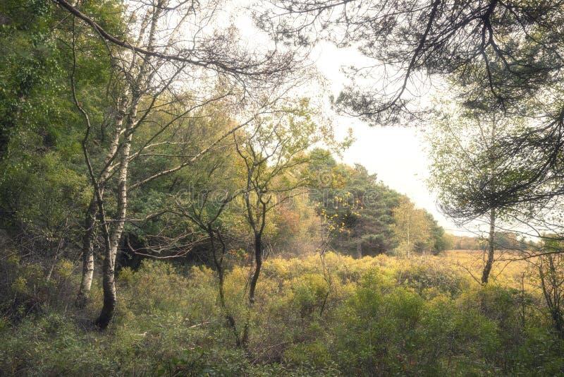 Piękni wibrujący jesień spadku drzewa w spadku kolorze w Nowym lesie w Anglia z oszałamiająco światłem słonecznym robi kolorom st fotografia stock