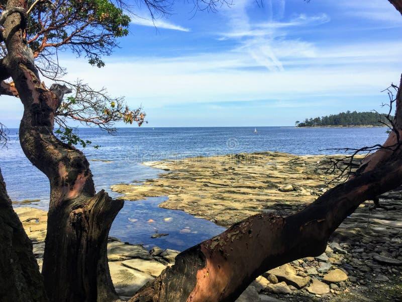 Piękni widoki spokojny ocean spokojny i zatok wyspy podczas gdy patrzejący za arbutus drzewem obraz royalty free