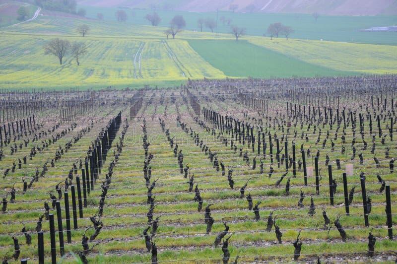 Piękni winnicy w sancerre fr, dokąd wino produkuje fotografia stock
