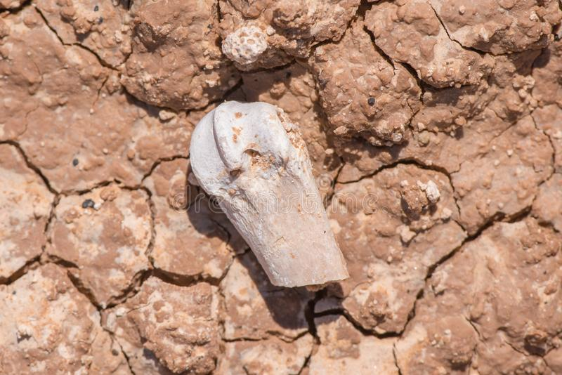 Piękni wzory tworzący w błocie, skale z skamieniałą widoczną opłatą wysuszonych/teraz erozja - badlands park narodowy obrazy royalty free