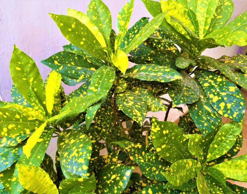 Piękni Yellowish & Zieleni liście zdjęcie stock