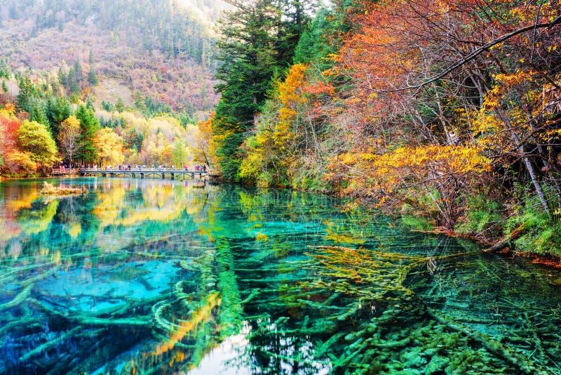 Piękni zanurzający drzewni bagażniki w wodzie Pięć Kwiat jezioro fotografia stock