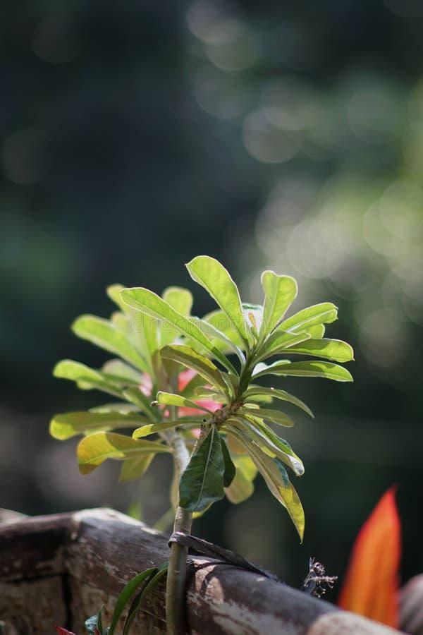 Piękni zieleń liście przy mój balkonem obrazy royalty free