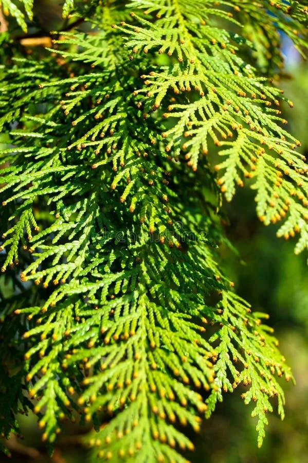 Piękni zieleń liście w słońcu fotografia royalty free