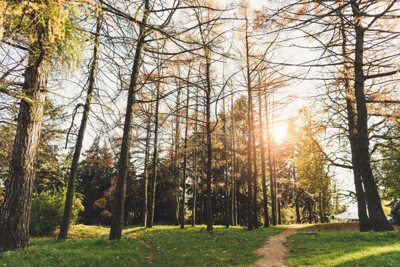 piękni zieleni drzewa i droga przemian w jesień parku obraz royalty free