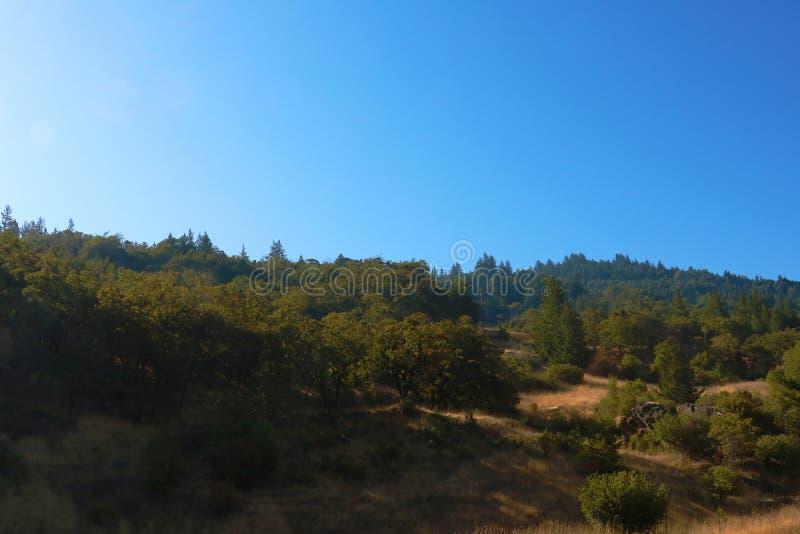 Piękni zieleni lasy Kalifornia na słonecznym dniu zdjęcie stock