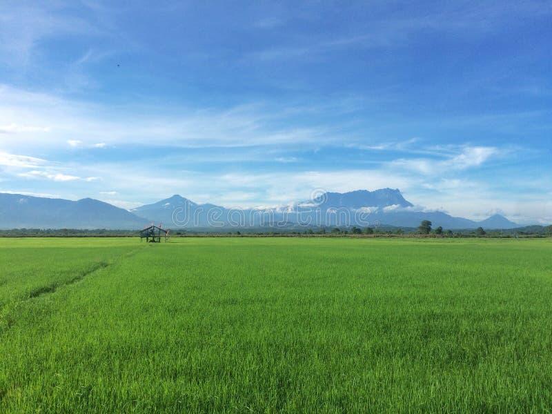 Piękni zieleni pola z niebieskiego nieba i góry Kinabalu widokiem zdjęcia stock