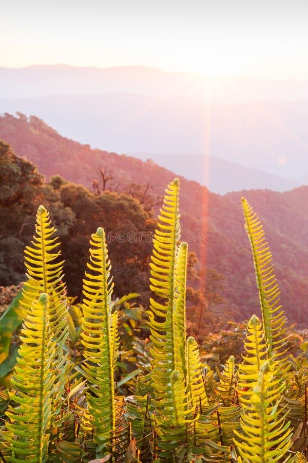 pięknie razem Jaskrawy i kolorowy sceniczny krajobraz Złoty wschód słońca błyszczy wokoło gór tropikalnego lasu i, świeża paproć obraz royalty free