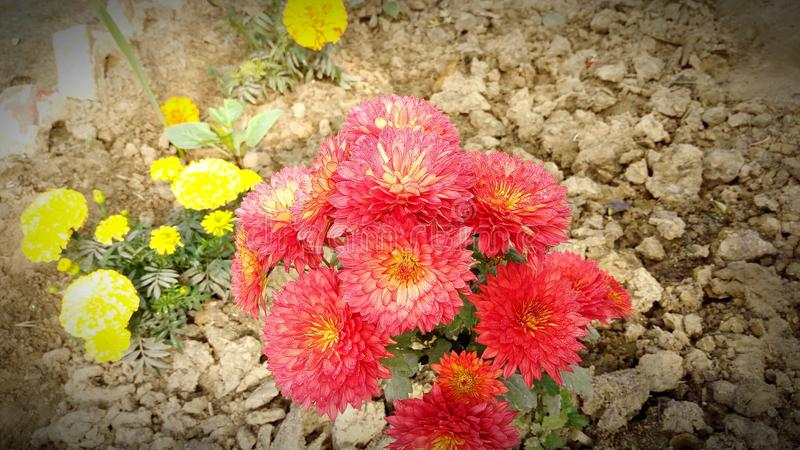 Pięknie ustaweni kwiaty w składzie obraz stock