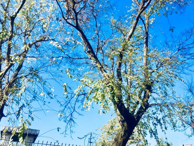 Piękno drzewo w jesień sezonie zdjęcia stock
