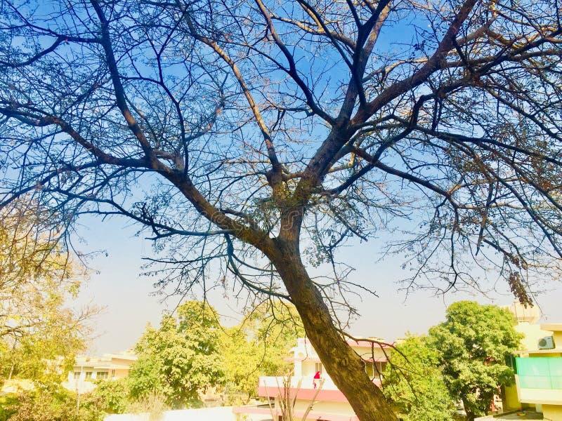 Piękno drzewo w jesień sezonie fotografia stock