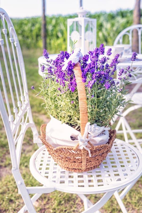 Piękno i świeża lawenda w kwiatu garnku obraz royalty free