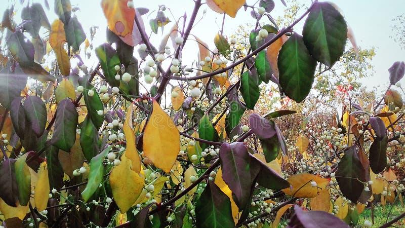 Piękno jesień liście wszystkie barwy jesieni Piękno jesieni natura zdjęcie royalty free