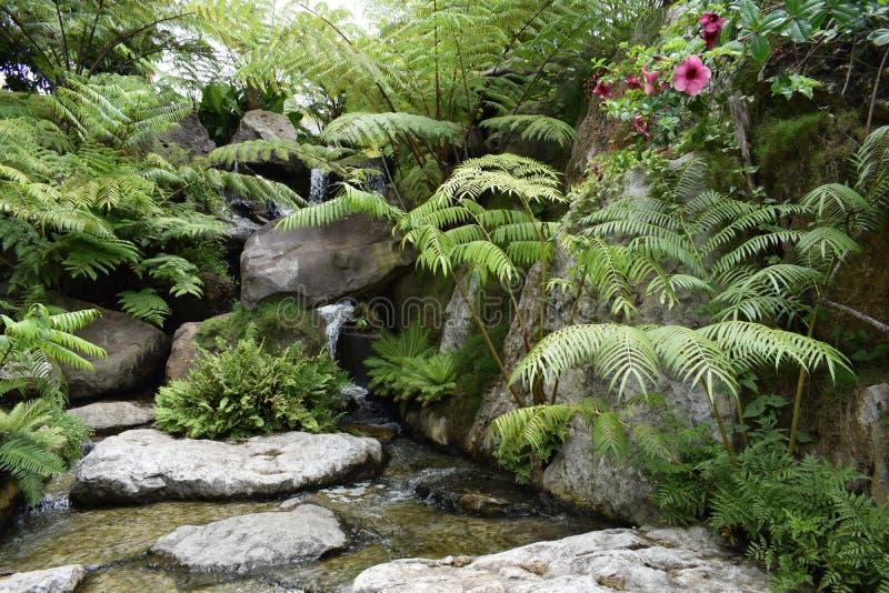 Piękno kamienna trawa i transparen wodę w rzece zdjęcie stock