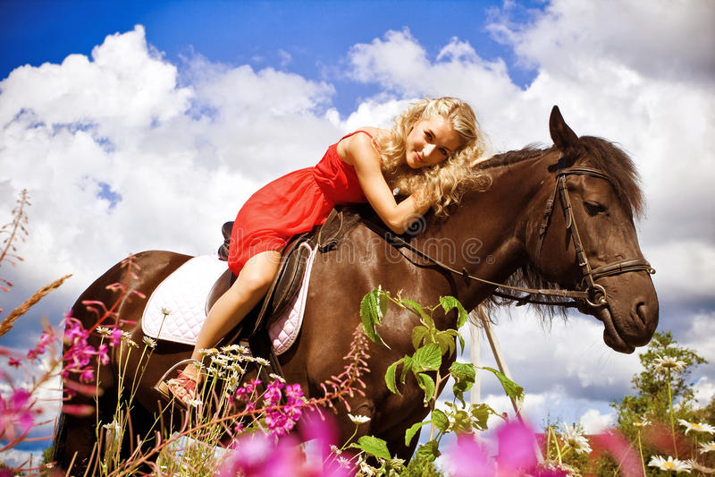 piękno koń zdjęcie stock