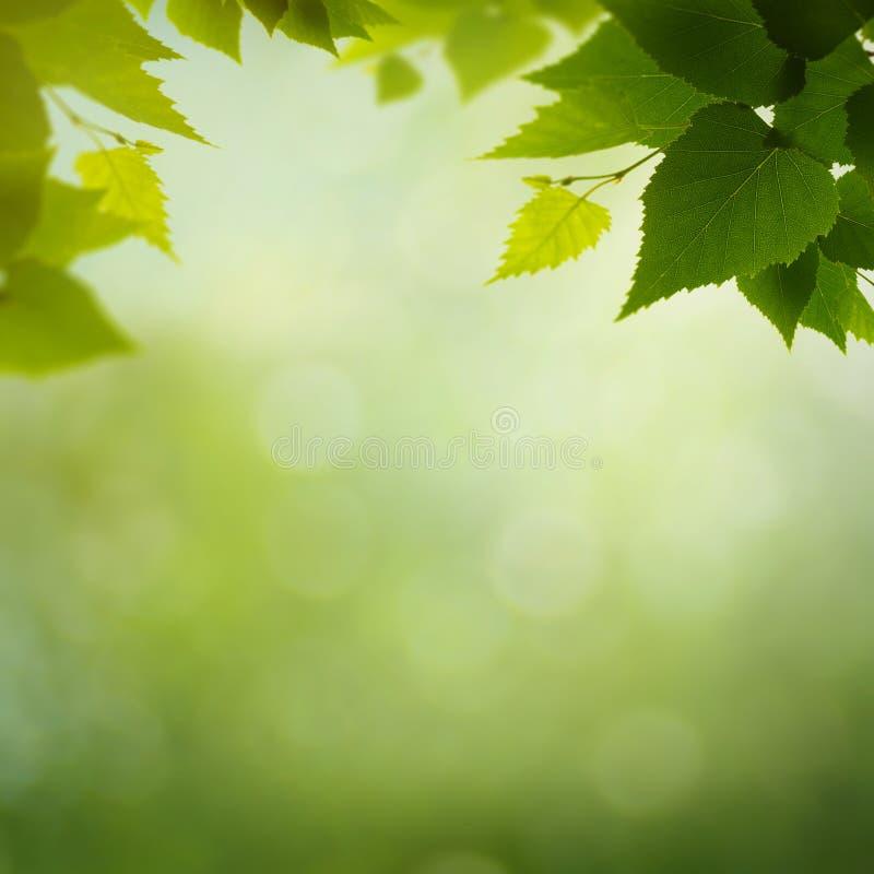 Piękno kolory wiosny natura fotografia stock