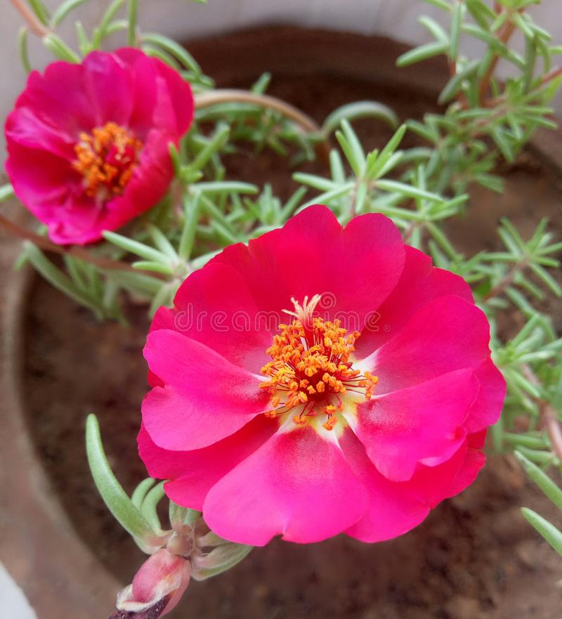 Piękno kwiat obraz royalty free