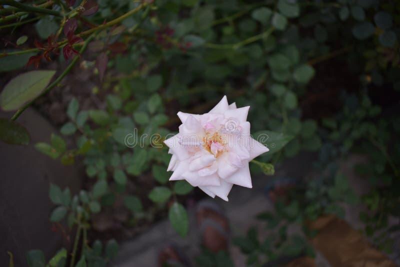 PIĘKNO kwiaty W NASZ naturze zdjęcia royalty free