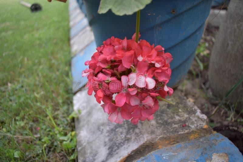 PIĘKNO kwiaty W NASZ naturze zdjęcie royalty free