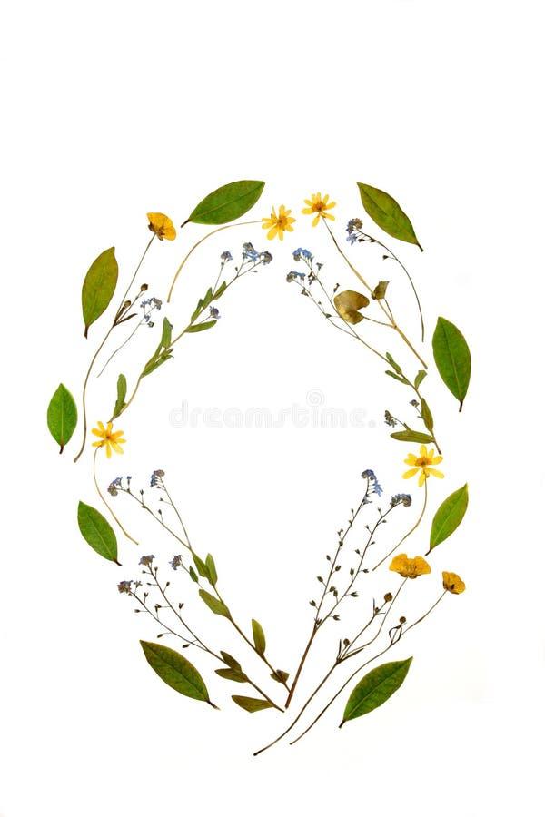 piękno kwiecisty ilustracja wektor