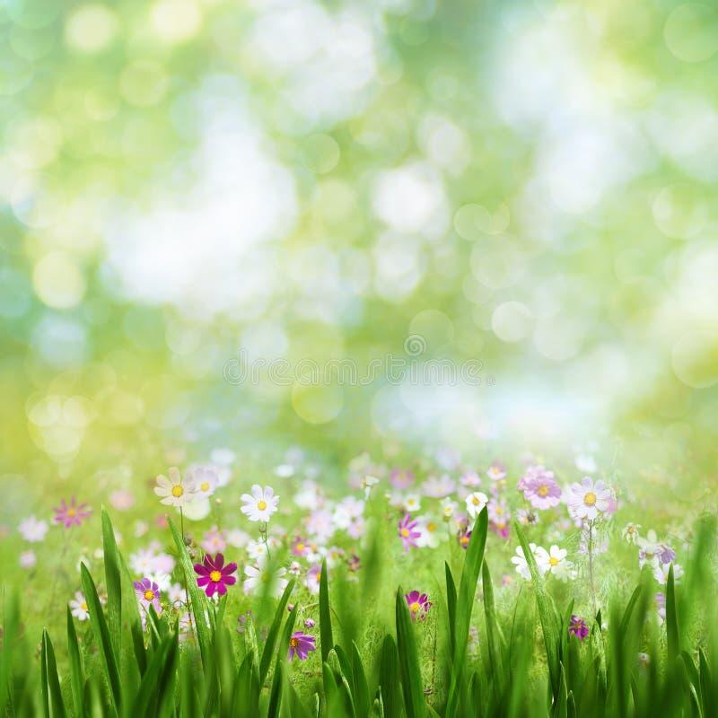 Piękno letni dzień, abstrakcjonistyczny wiejski krajobraz fotografia stock