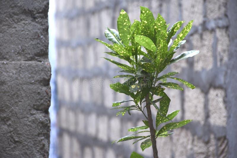 Piękno liście roślina obrazy stock