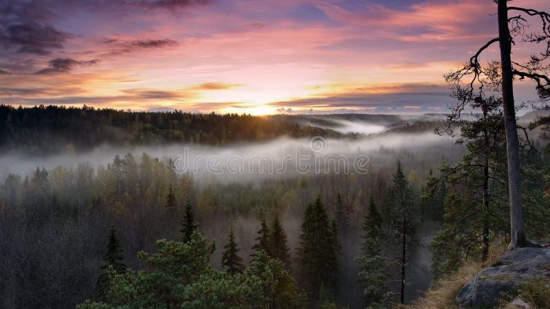 Piękno natura obraz royalty free