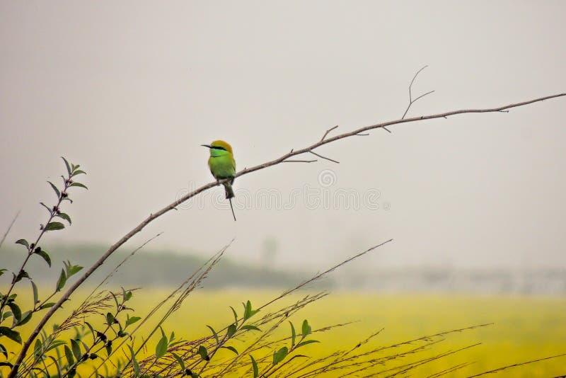 Piękno natura zdjęcie stock