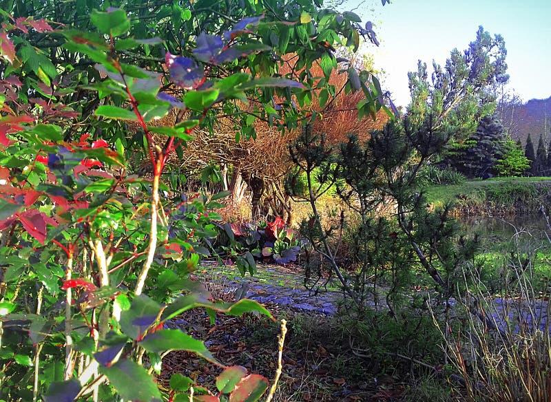 Piękno natura w wczesnej jesieni zdjęcia stock