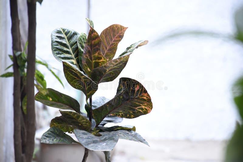 Piękno naturalni liście drzewo fotografia stock