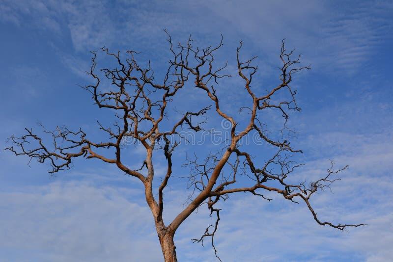 Piękno nieżywy drzewo obraz stock