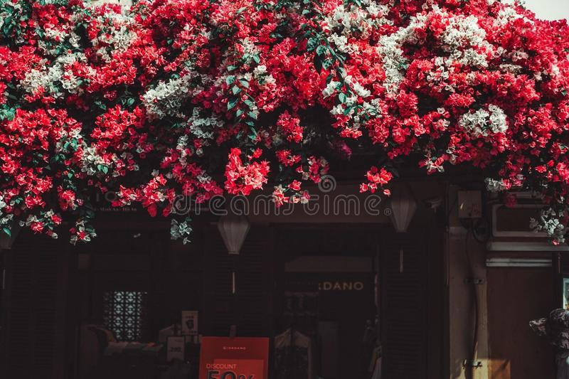 Piękno Papierowy kwiat w Vietnam zdjęcie stock