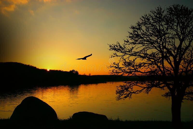 piękno przyrody fotografia stock