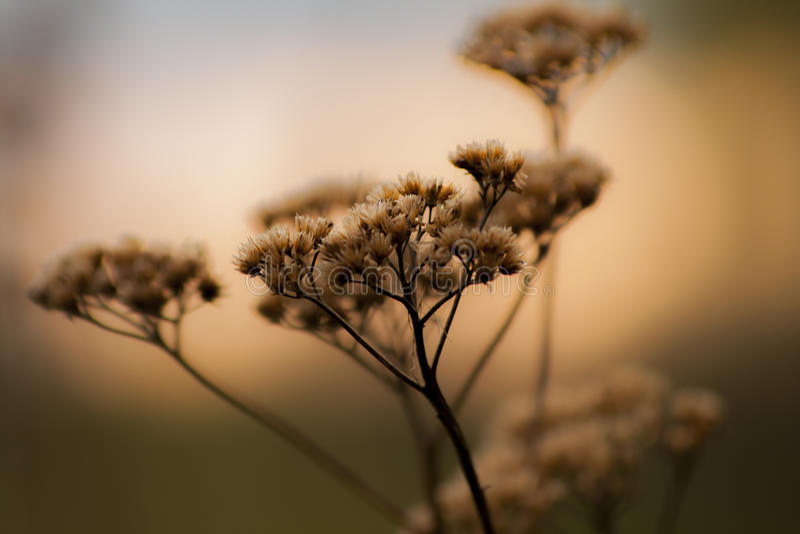 Piękno roślina zdjęcia royalty free
