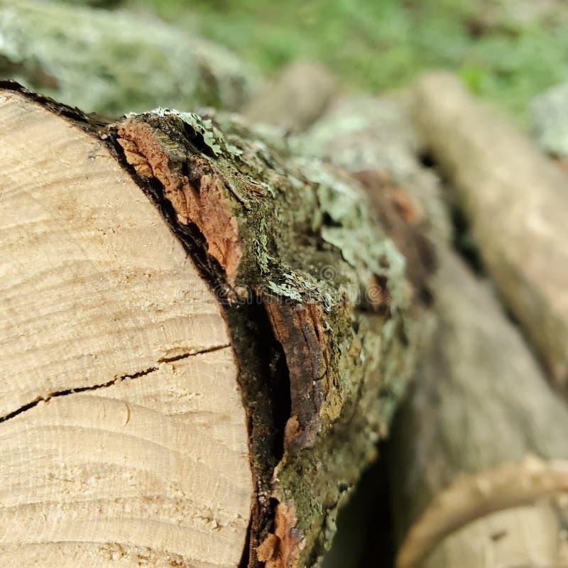 Piękno siekający drewno fotografia royalty free