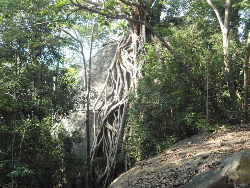 Piękno wśrodku lasu obrazy stock