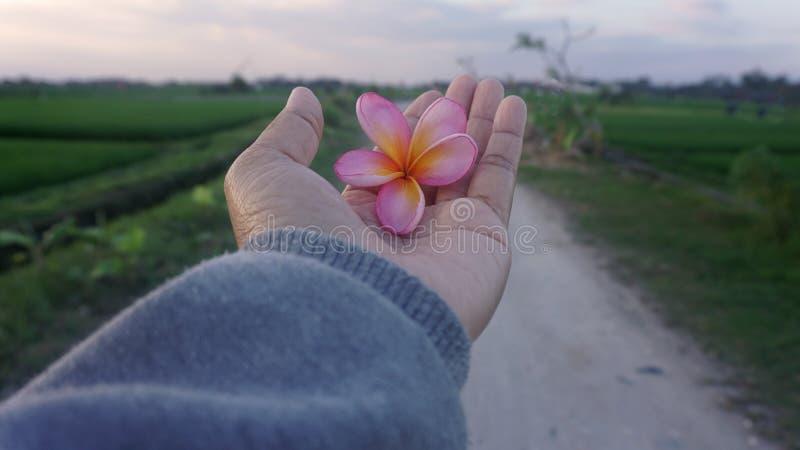 Piękno w ręce Otwarta ręka otrzymywa piękno błogosławieństwa zdjęcia royalty free