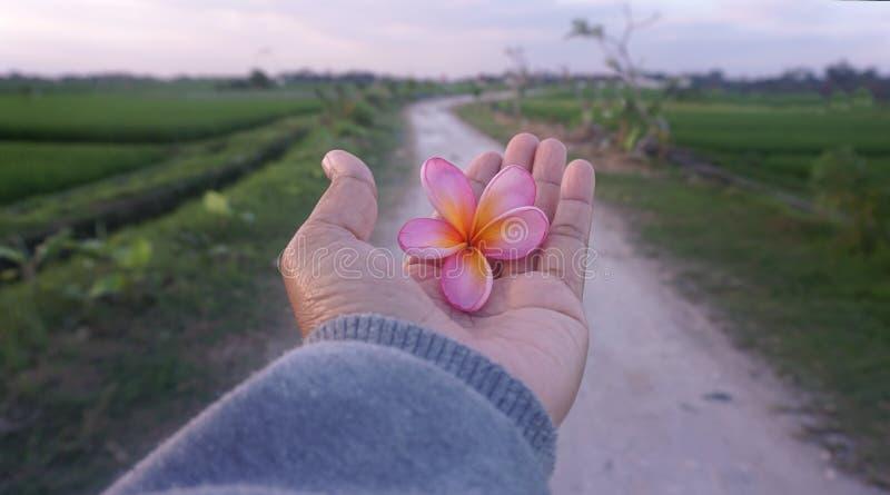 Piękno w ręce Otwarta ręka otrzymywa piękno błogosławieństwa obrazy royalty free