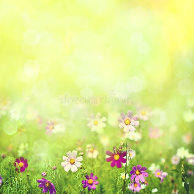 Piękno wiosna i lato krajobraz obrazy stock